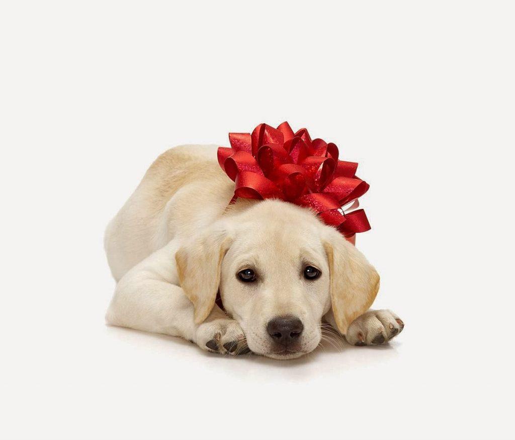 Шоколадные фигурки, шокосити, Шокосити, ШокоСити, ООО ШокоСити, новогодние подарки, рождественские подарки, символ года, кролик, бык, змея, петушок, петух, свинья, свинка, свинка пэпа, свинка пепа, лошадь, тигр, дракон, крыса, овца, баран, коза, обезьяна, обезьянка, собака, Собака Джек, собачка, медальки, медальки с собачкой, дед мороз, зайчик, заяц, снеговик, снегурочка, мишка, новогодние часы, колокольчик, варежки, ангелочки, фонарик, новогодний носок, сапоги, шары, шарики, шар, шарик, шишки, шишка, хит продаж, , шоколад, шоколадное шампанское, шоколадные фрукты, ёлочки, елка, елки, символ богатства, подарочные наборы, глазурь, гирлянды, фейрверки, рождество, подарки, подарки ко Дню Всех Влюблённых, подарки к 8 Марта , Сердечки, сердце, Шоколадные открытки, Шоколадные цветы, Тюльпаны, Розочки, Розы, Ромашки, Герберы, Подсолнухи, Каллы, подарки к Пасхальным праздникам, Ангелочек, Шоколадные яйца, яйца с сюрпризом, киндерсюрприз, Пасхальные Курочки, куры, цыплята